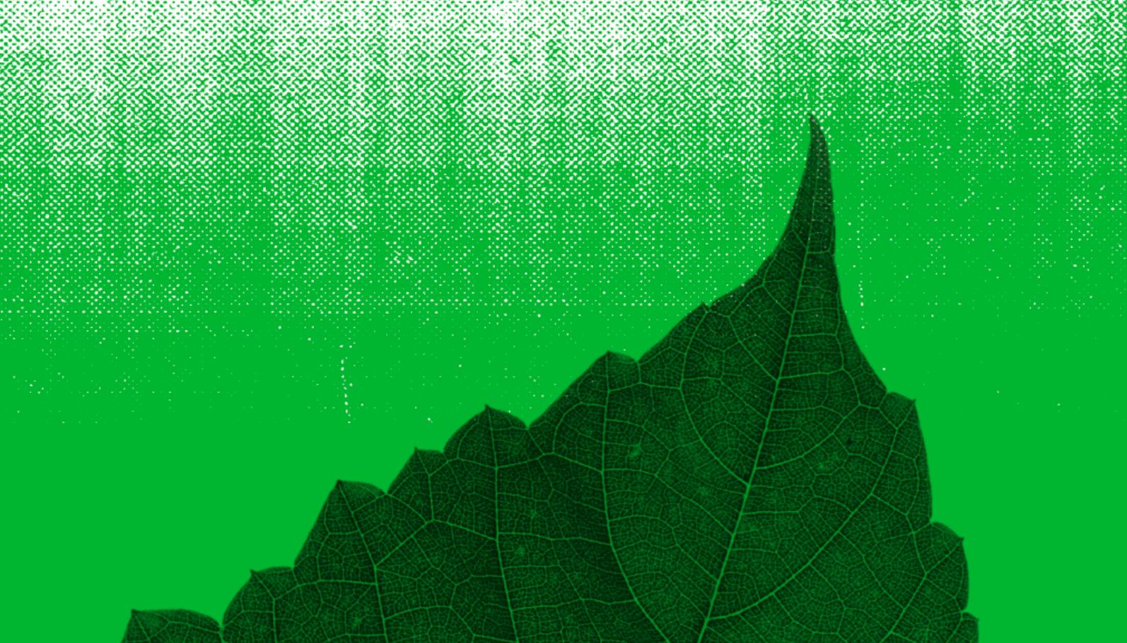 Sistemas e ferramentas de consulta de dados socioambientais